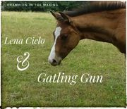 Top Reining Painthorse