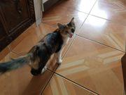 Twiggy Katze aus dem Tierschutz