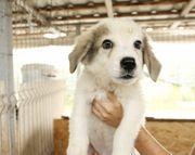 Chico - ein Hund zum Verlieben