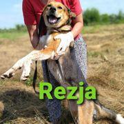 Familienhündin Rezja sucht ihr Zuhause