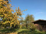 Freizeitgrundstück im Ulmer Norden Obstbaumwiese