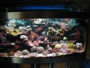 Meerwasserauflösung Korallen Lebendgestein Fische Meerwasser