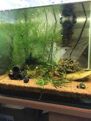 Aquarium 30 l mit Inhalt