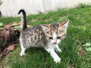 Ein süßes Katzenbaby