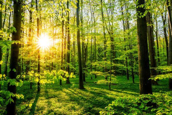 Kaufe Wald Waldgrundstück im Bezirk