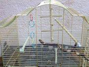 Vogelkäfig Messing auf braunem Ständer