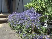Häuschen mit Garten