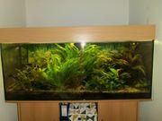 Letzte Chance vollständiges intaktes Aquarium-Set