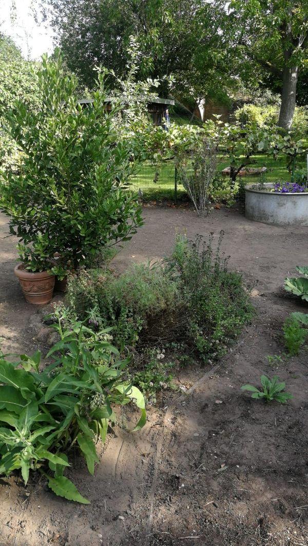 Kräutergarten mit Obst und Gemüseanbau