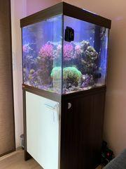 Meerwasser Aquarium - Hobby Auflösung