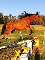 Freizeit Pferd-Familien Pferd-Spring Pferd