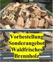 Vorbestellung Wald frisches Buchen Brennholz