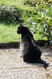 kostenlos kurzzeitige Betreuung Katze Käfigtier