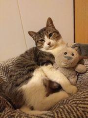 Katze Dora sucht ein Zuhause
