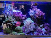 Eheim Inspiria 300 Marine Meerwassee