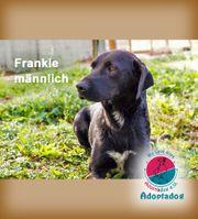 Frankie - wir hoffen das seine