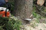Baum Pflege Fällung