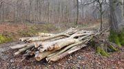 Brennholz Stammholz Langholz Esche