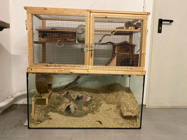 Toller Mäusekäfig Nager Hamster Maus