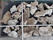 Totes Riffgestein - Steine für Riffaufbau
