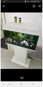 Aquarium Zubehör Fische