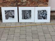 Bilder Zebras