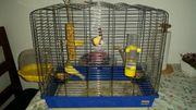 zwei kanarienvogel mit käfig