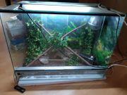 Terrarium inkl Lampe und Wärmelampe