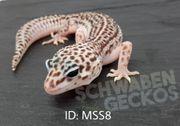 Leopardgeckos Mack Super Snow Combos