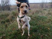 Sparky aktiver Familienhund ca 2