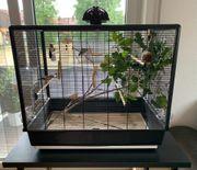 Zabrafinken-Pärchen und Gouldamadine mit Zubehör