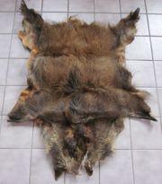 Wildschweinfell Dekoration