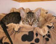 Celeste sucht ein geduldiges Zuhause