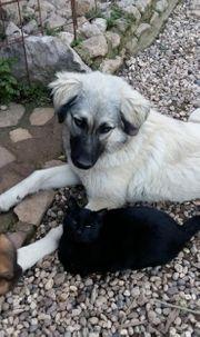Tierschutzhündin Bijou sucht ein zu