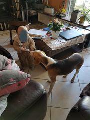 Melody-sanftes Hundemädchen möchte eine Familie