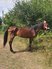 Pferd in Not ein Hilferuf