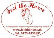 Pferdeausbildung - Beritt - anreiten - Problempferde