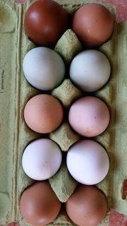 täglich frische Hühner-Eier vom Bauernhof
