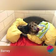Barney - Der Meister des leidenden