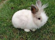 kastrierte Kaninchen Buben suchen ein