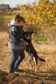Familienhündin Kelly sucht ihr Zuhause