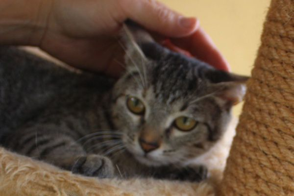 Katzenbabys suchen eine liebe Familie