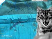 Didymos Tragetuch Geckos aqua Gr