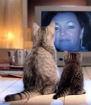 Katzensitting private liebevolle Betreuung über