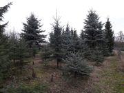 Garten Pachtgrundstück Alfter