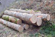 Eschenstämme Brennholz Kaminholz