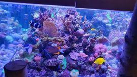 Fische, Aquaristik - Meerwasser korallen