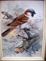 Ölgemälde Vogel Spatz von O