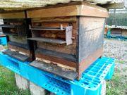 Bienenvölker auf Zadantmaß