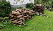 Brennholz Haselnuss ca 4 RM